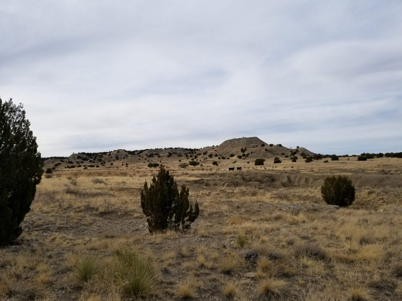 milehighruralland.com_Hunting Habitat