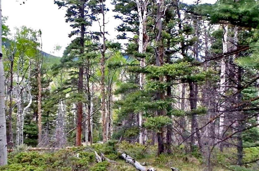 milehighruralland.com_APN122444 (LOT 19)
