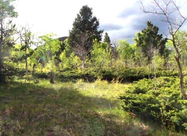 milehighruralland.com_Cuchara Mountain Park Lot For Sale